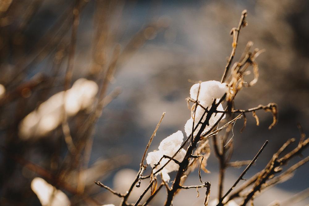 Archer Inspired Photography Family Road Trip Lifestyle Photos NorCal Sacramento South Lake Tahoe Reno Truckee Documentary Memories-147.jpg