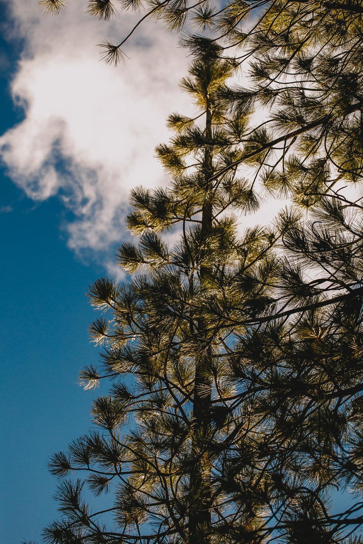 Archer Inspired Photography Family Road Trip Lifestyle Photos NorCal Sacramento South Lake Tahoe Reno Truckee Documentary Memories-160.jpg