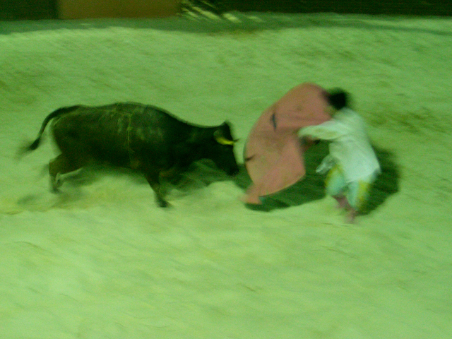 bull fight.png