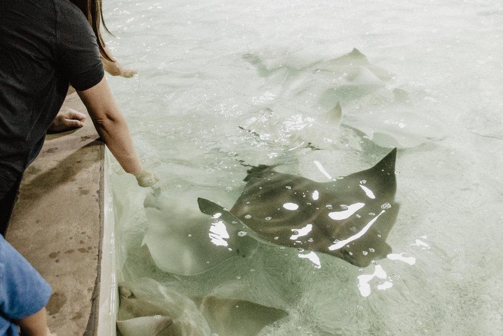 aquarium-16.jpg
