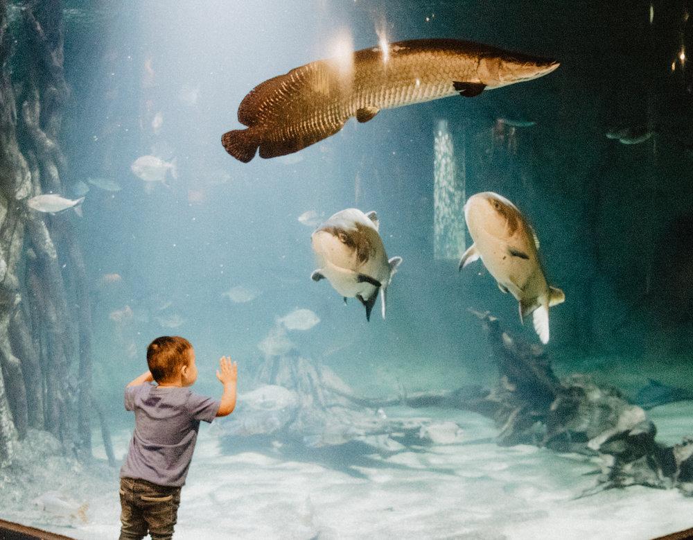 aquarium-18.jpg