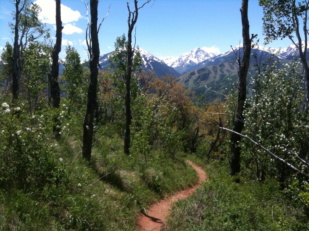 Hiking Trail Near<br> Aspen Colorado
