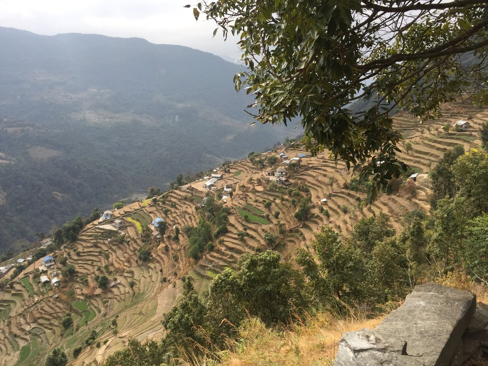 Terraced Hillsides<br> Nepal