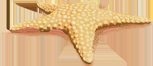 Starfish_LR.png