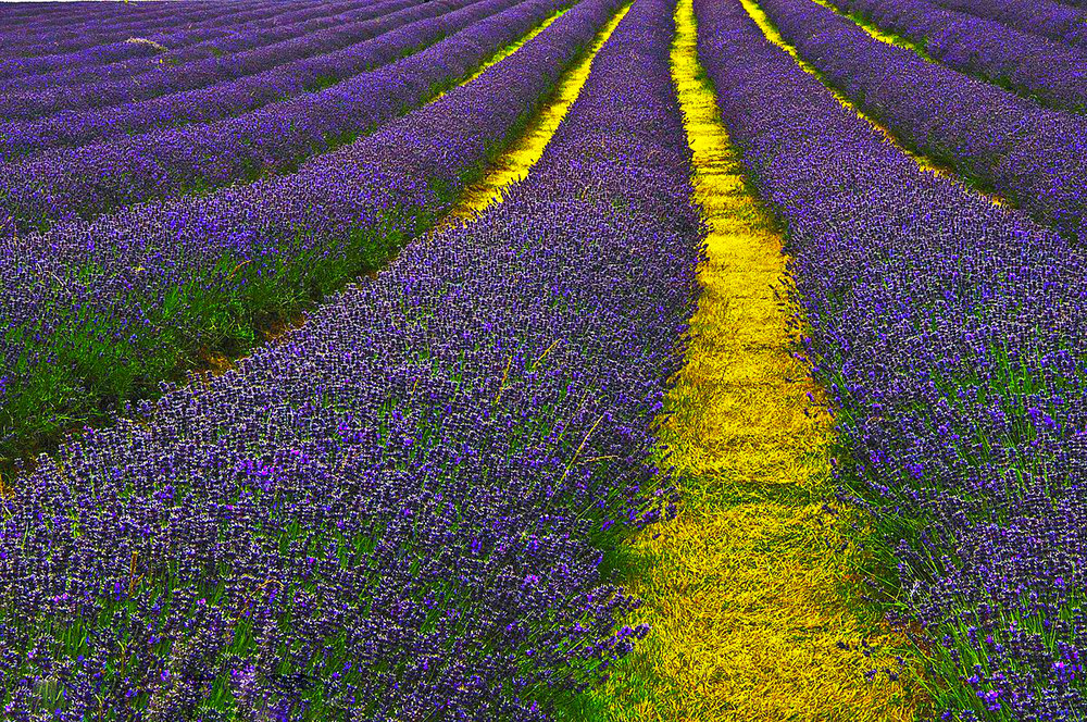 Ideal to calm your mind - lavender