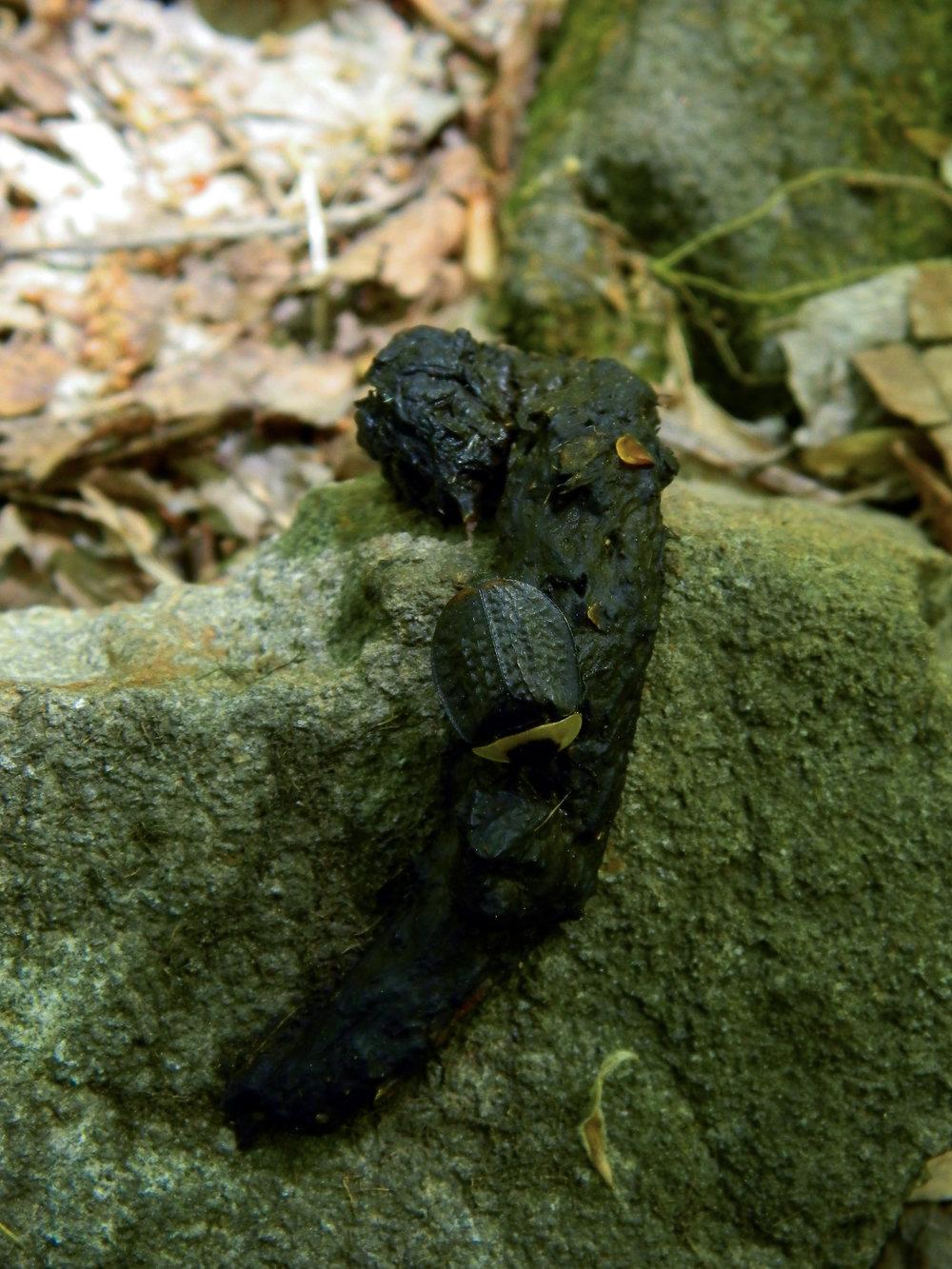 America Carrion Beetle | Bellaire Woods |© 2013 Jessica Allen
