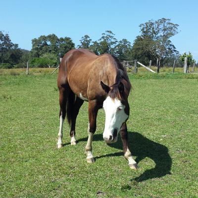 Ruben, 2 years, horse