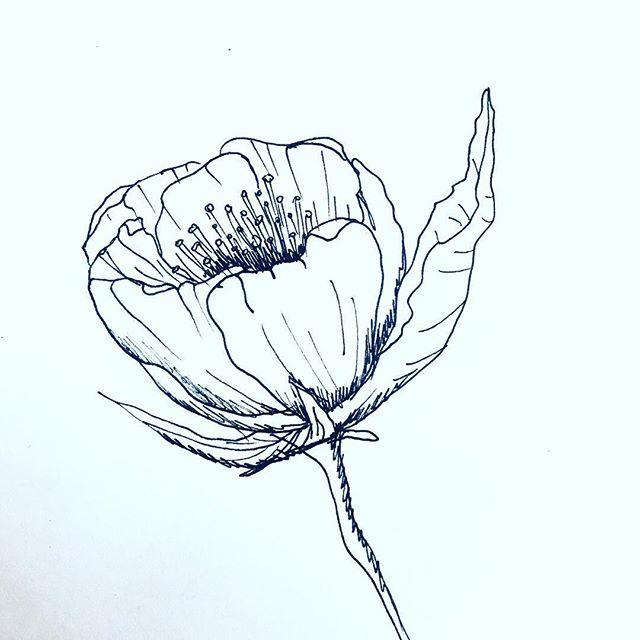 Sketch #peonies #blackandwhite #penonpaper