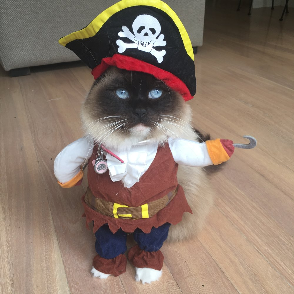 Ahoy there