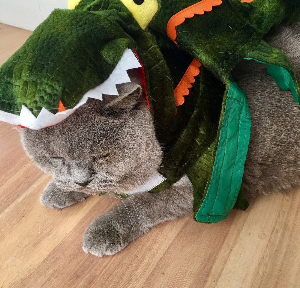 Alfie isn't a fan of dressing up!
