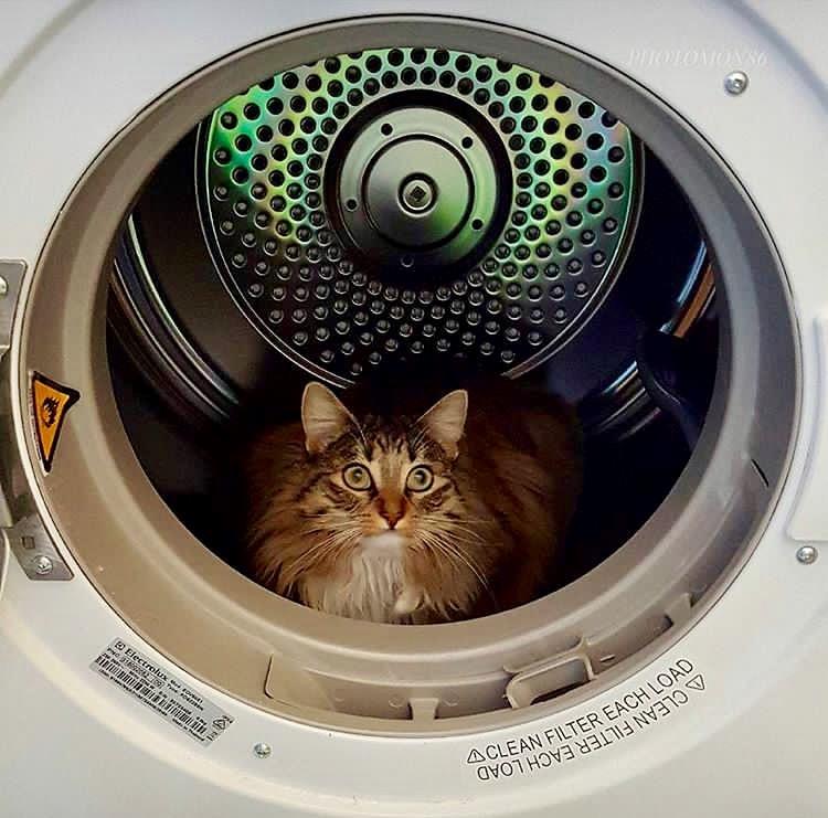 Clean cat!!