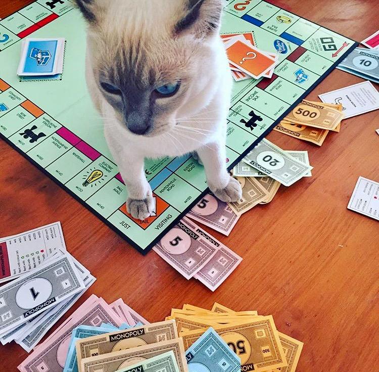Mojo's Monopoly mad!