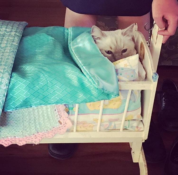 Cat's in the cradle!