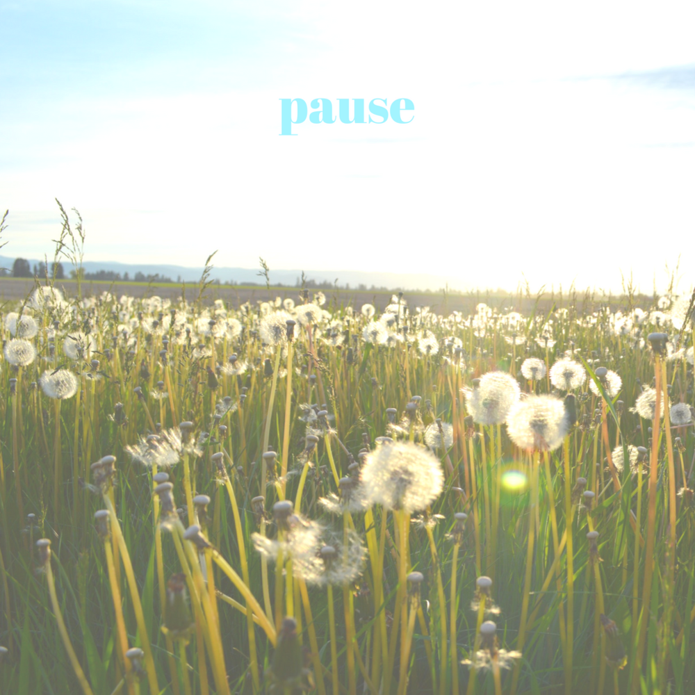 pause and reflect