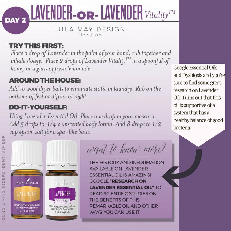 lavenderand dysbiosis.png