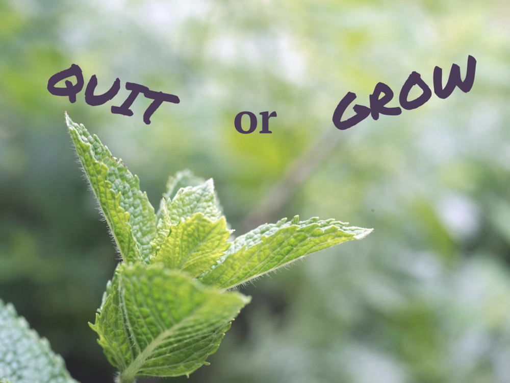Quit or Grow