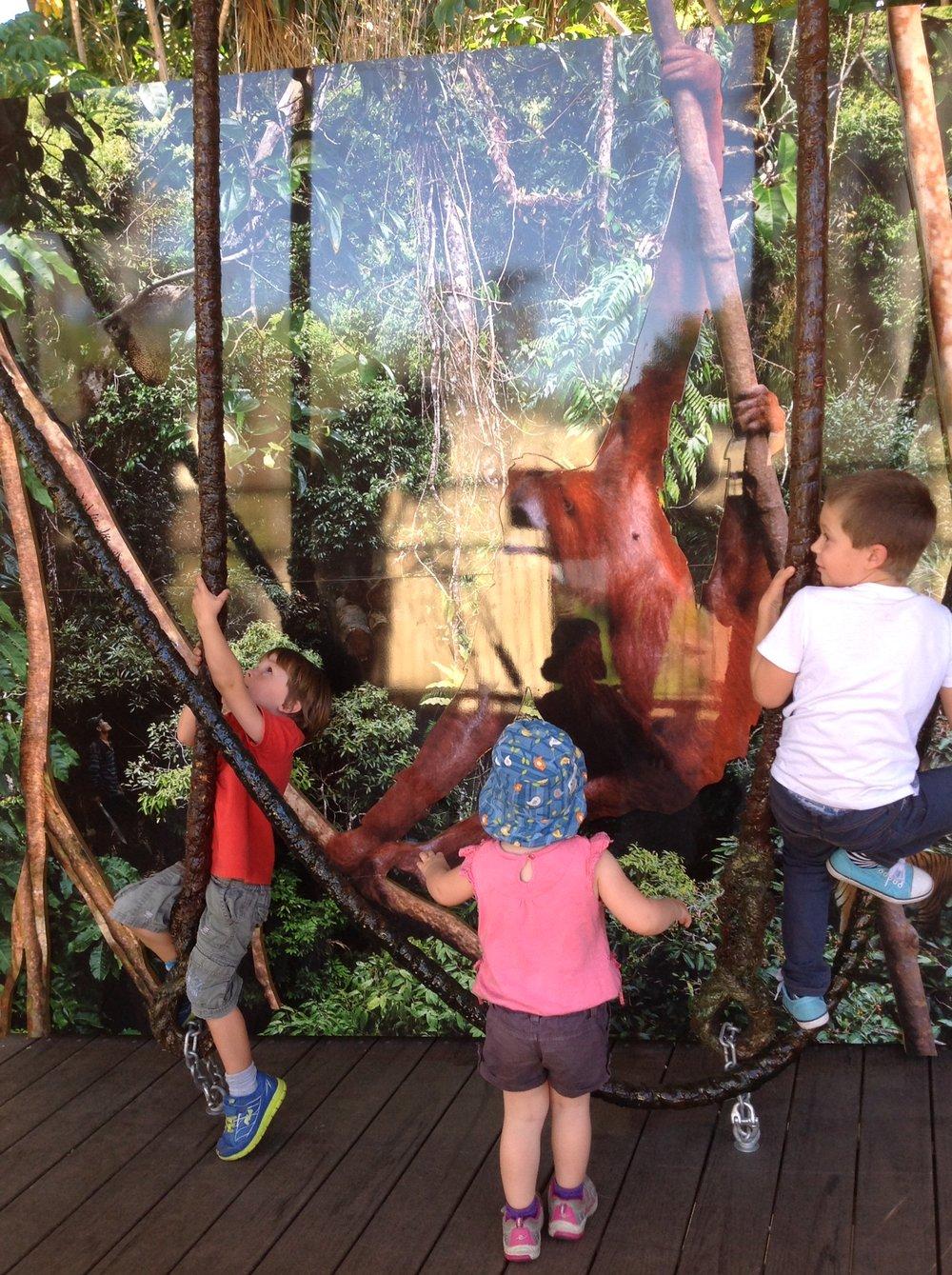 stay in the trees Perth Zoo Orangutan 2014.jpg