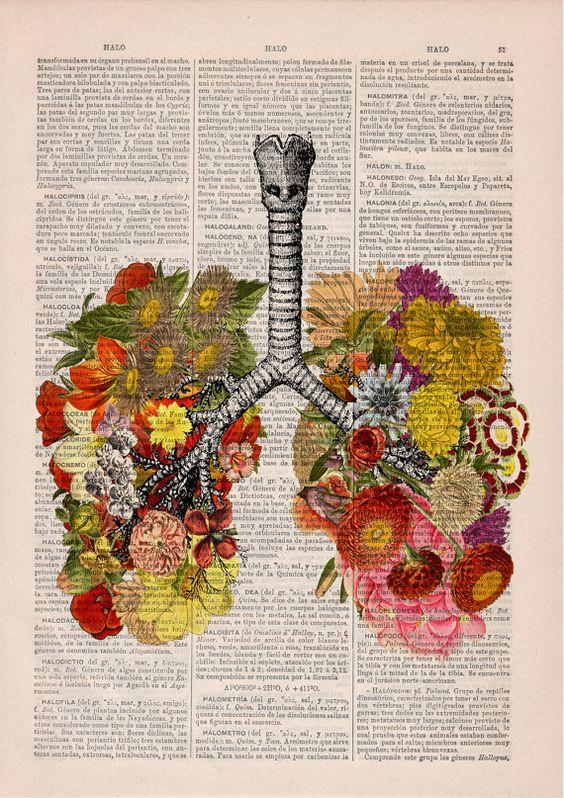 lungs 3.jpg