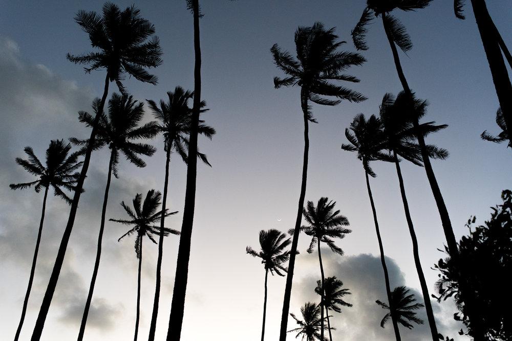 Kauaiian Palms feat. hint of moon