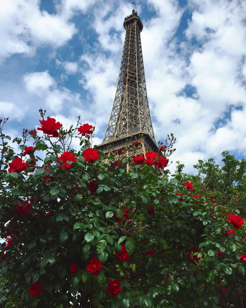 Eiffel tower in May with the roses blooming.Picture: Eleea