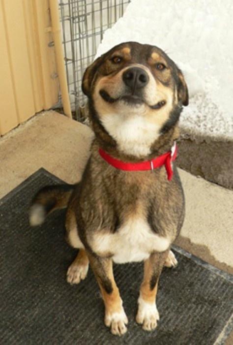 smiling-dog-2.jpg