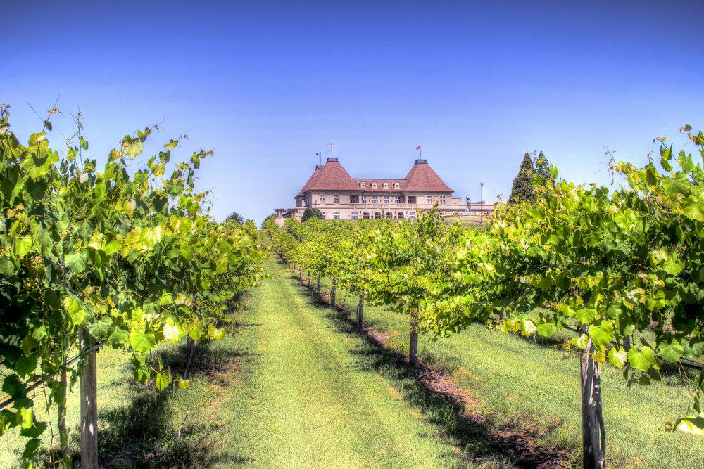 Winery_Vineyard.jpg