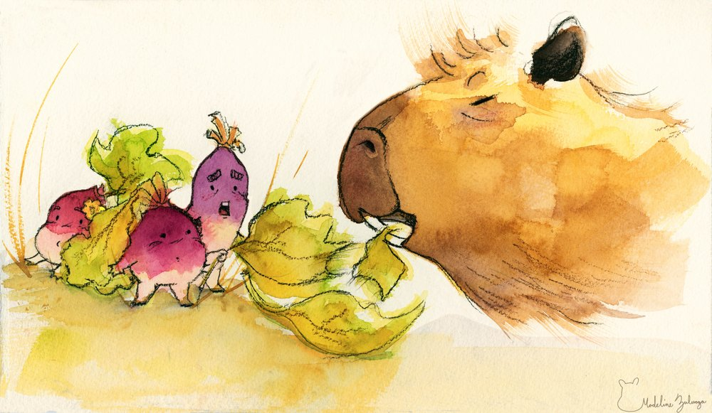 madelinezuluaga-capybara-and-turnips2.jpg