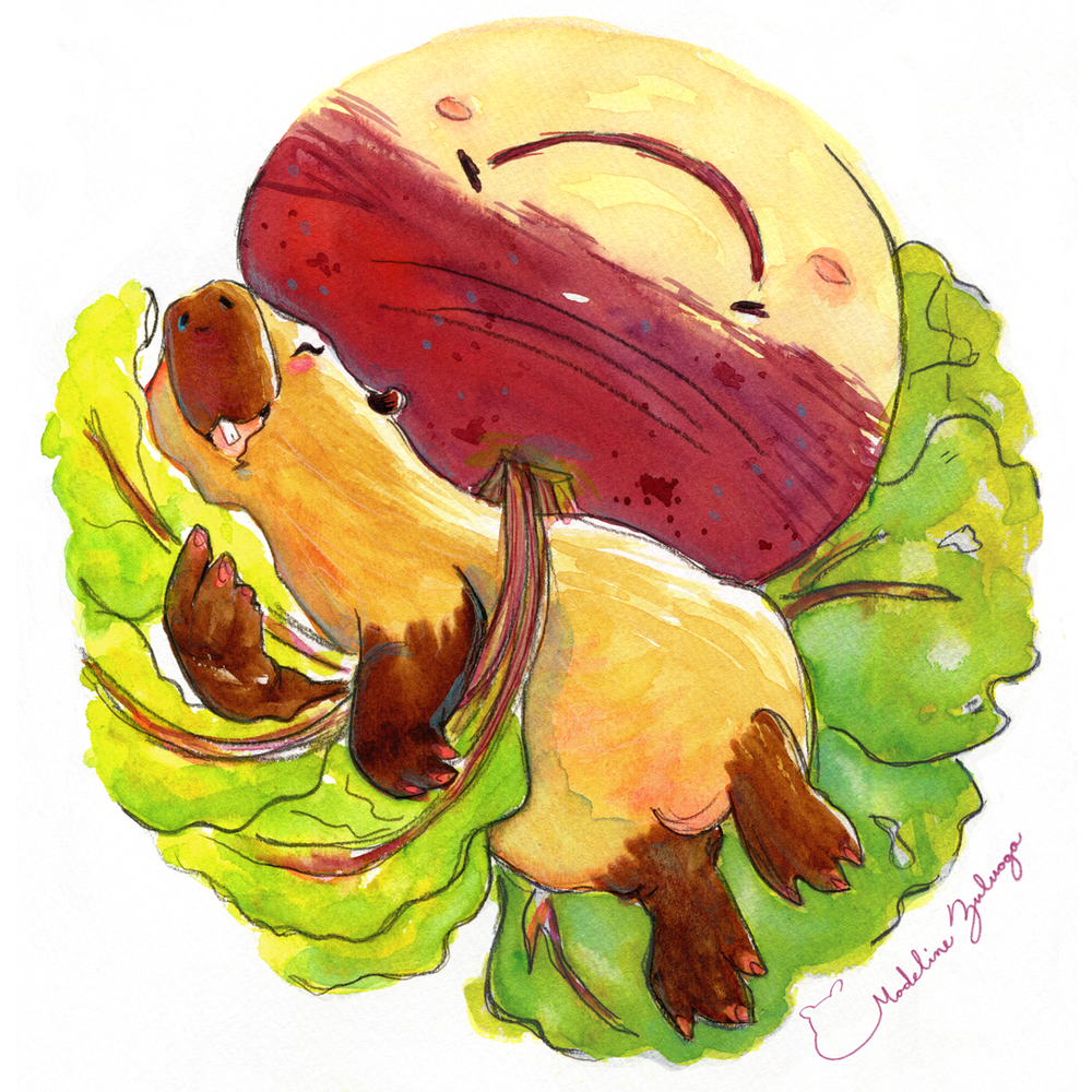 """8.27""""× 12.99"""" three watercolor illustration series based around capybaras and vegetables."""