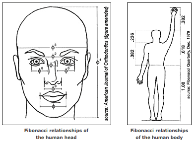 Fibonacci sequence as it relates to the human face and body.