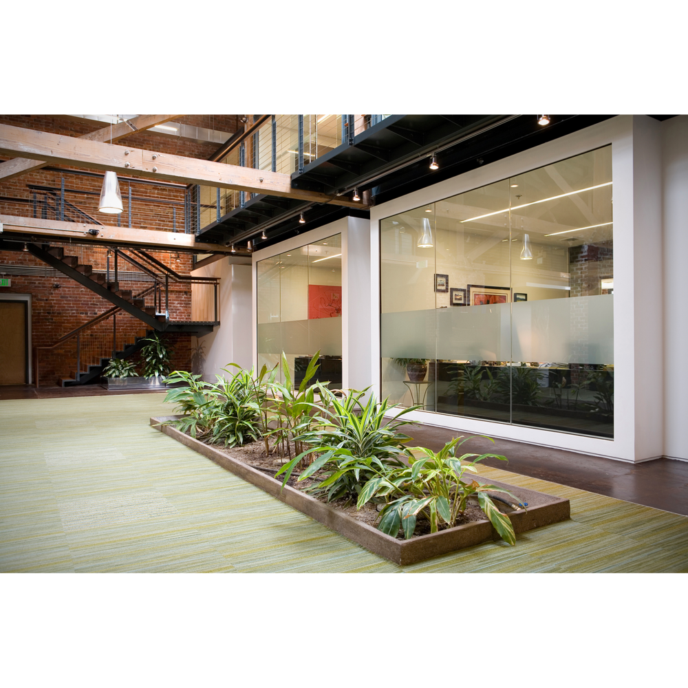 Architectural photograph of modern office with plants