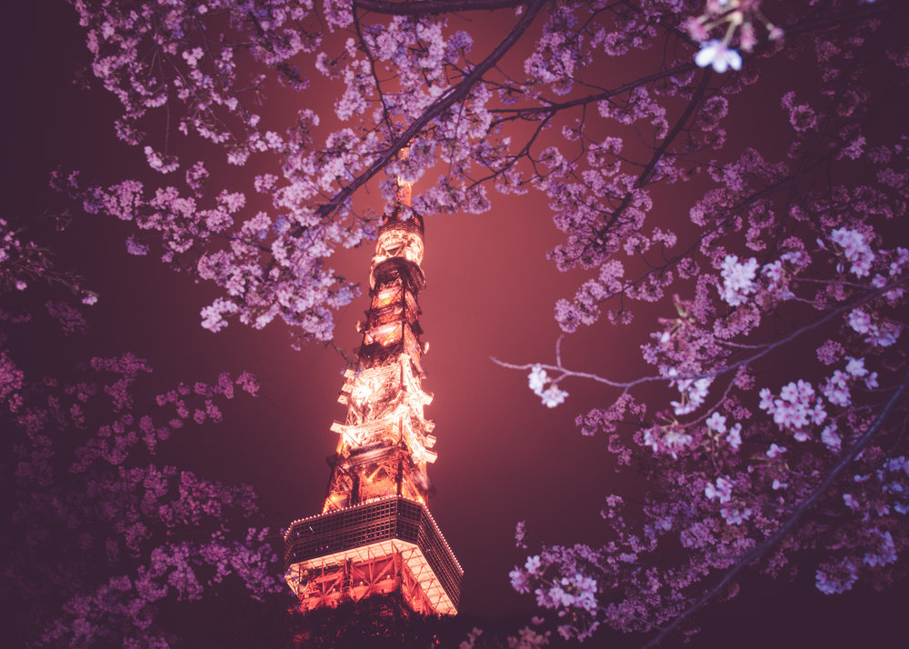 megane_wakui_8609280249_Cherry Blossoms And Tokyo Tower At Night.jpg