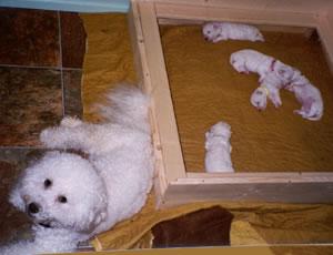 puppies01-01.jpg