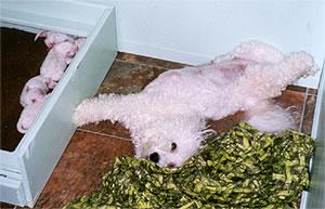 puppies07-01.jpg