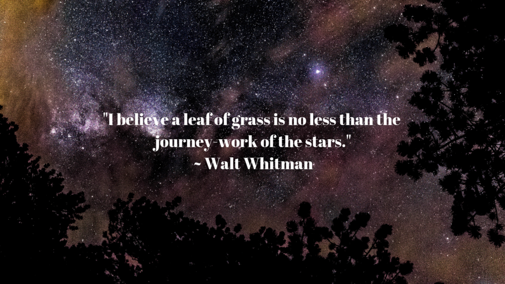 _I believe a lear of grass is no less than the journey-work of the stars.__ Walt Whitman.png