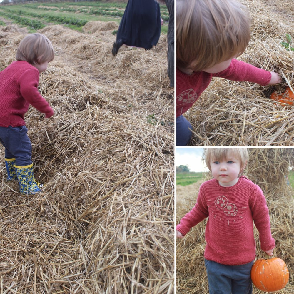 Brocksbushes farm shop and tea room Halloween 2016 Northumberland pumpkin patch kids events baby toddler. Eileen and Joe children's entertainer dressed as a witch, with a toddler. Toddler in the hay with a pumpkin