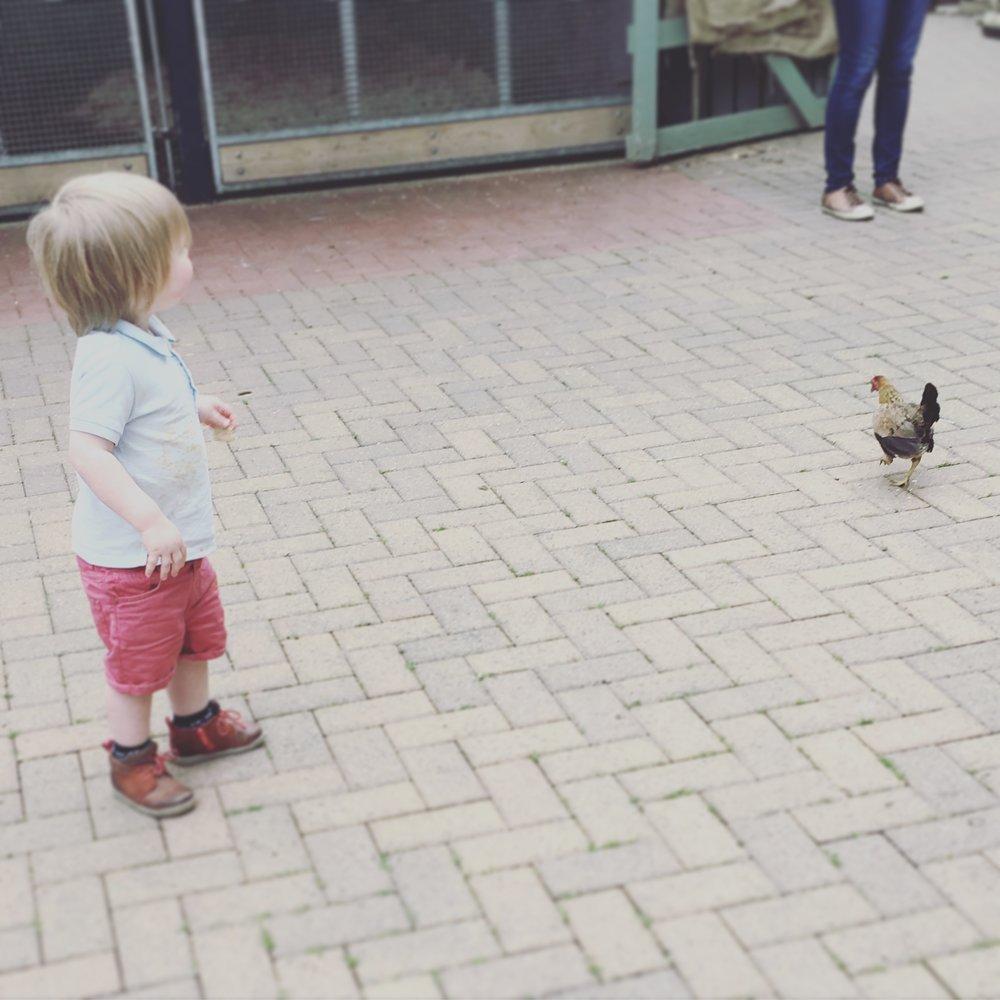 My toddler exploring Ouseburn Farm.