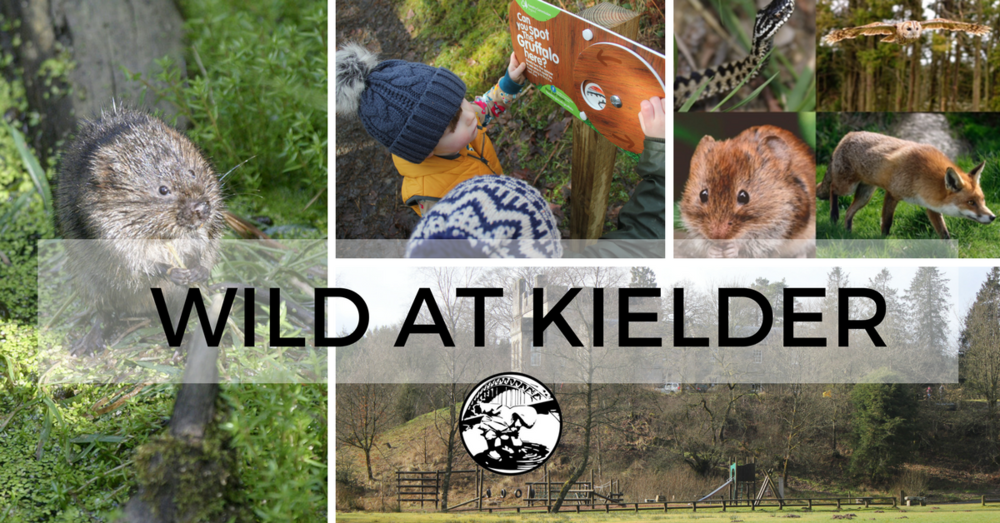Wild at Kielder Winter Wonderland Tickets Competition North East With Kids Sprog On the Tyne