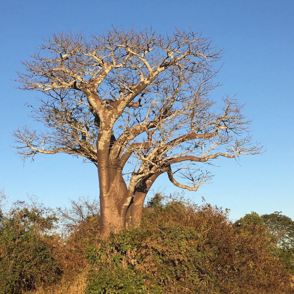 ZAMBIA - NANZHILA PLAINS SAFARI CAMP