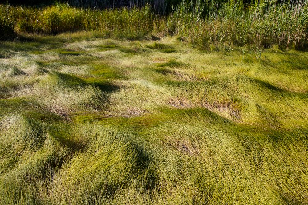 Marsh Wake