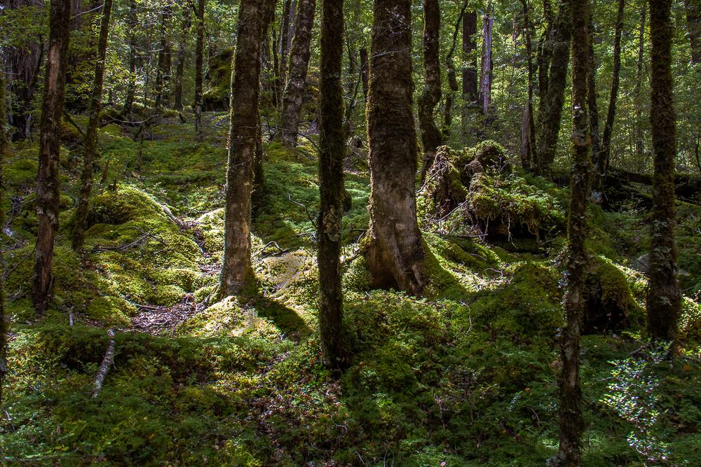 Hobbit Country