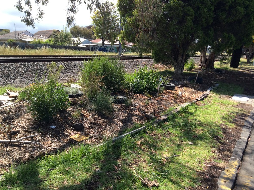 Successful plantings on Ararat Ave, Upfield line, Coburg North