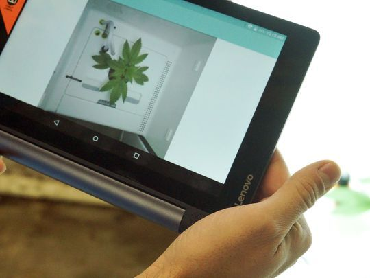"""Jonathan """"Yoni"""" Ofir of Leaf shows how users can monitor the growth of a marijuana plant inside the grow system using a webcam and a tablet. The company developed a system to help users share growing methods and techniques.(Photo: Trevor Hughes/USA TODAY)"""