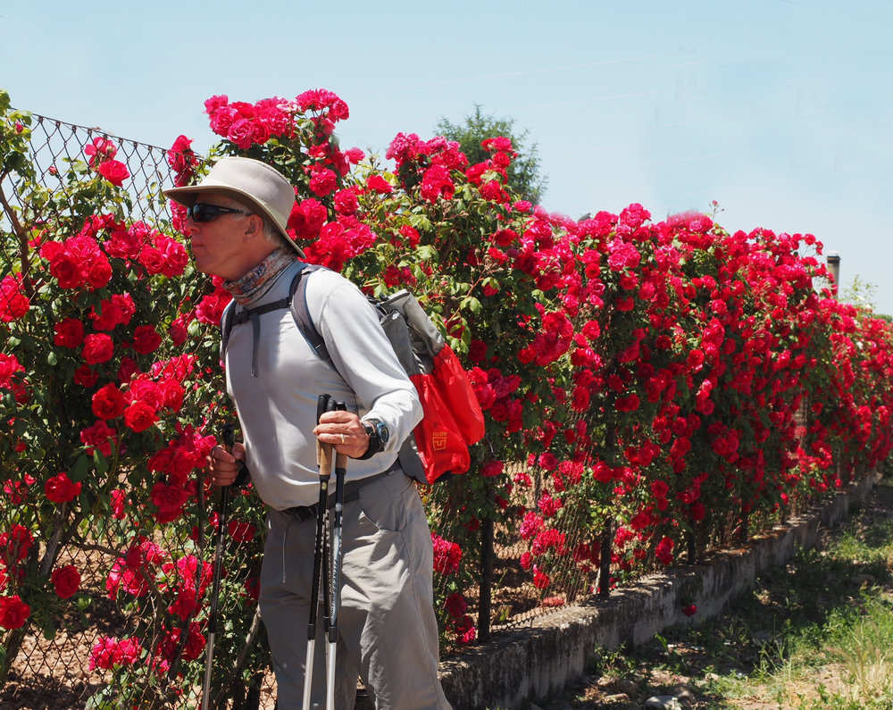 Enjoy the sweet, simple pleasures along the Camino.