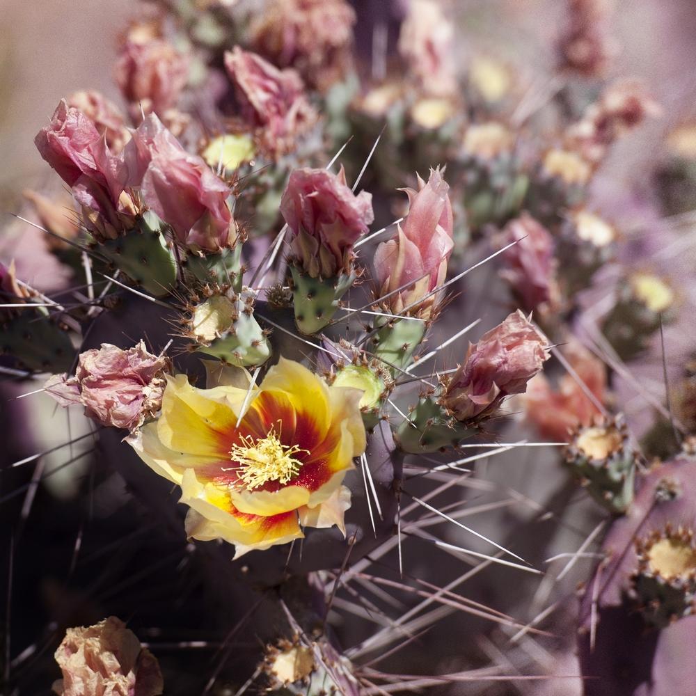 Cactus No. 1.jpg