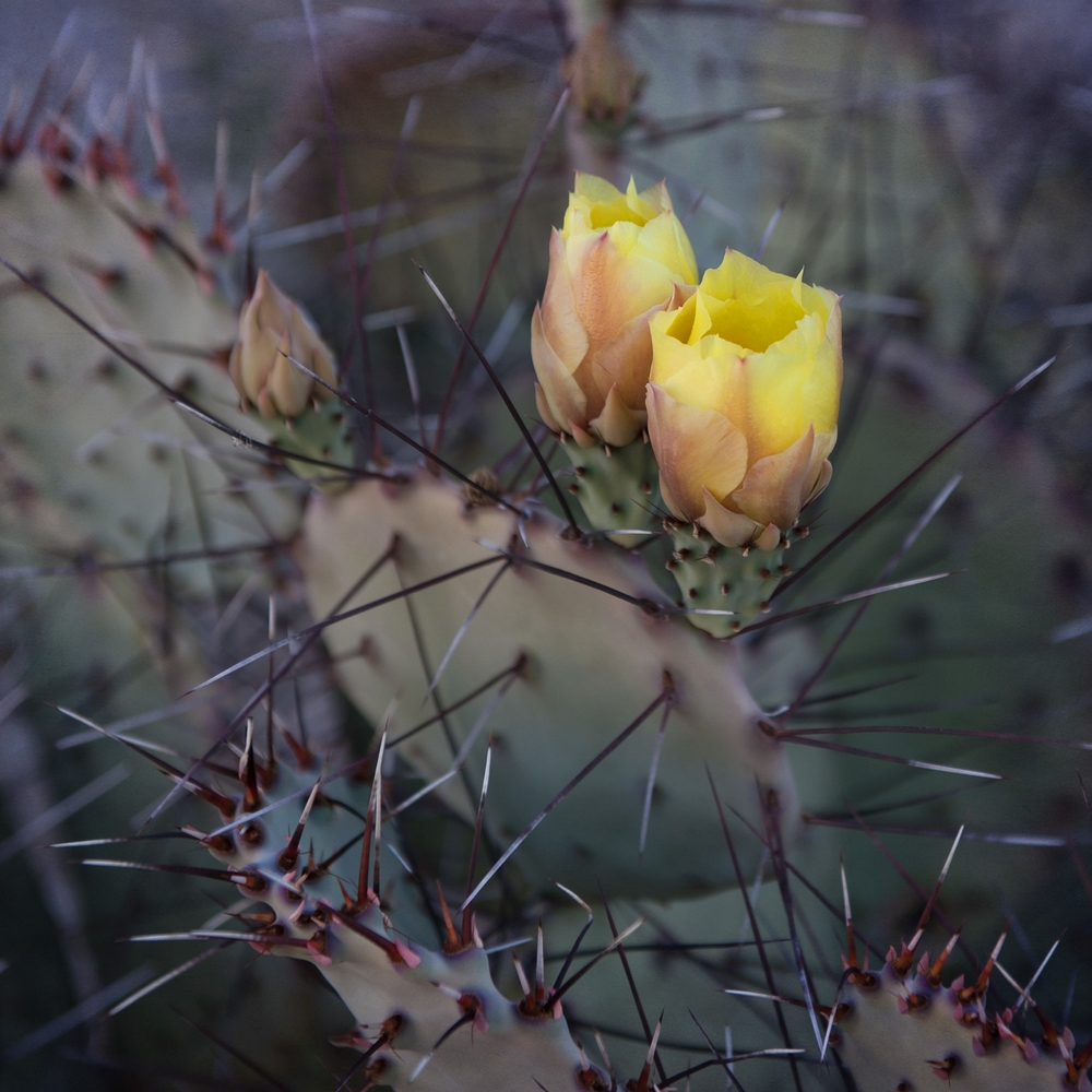 Cactus No. 2.jpg