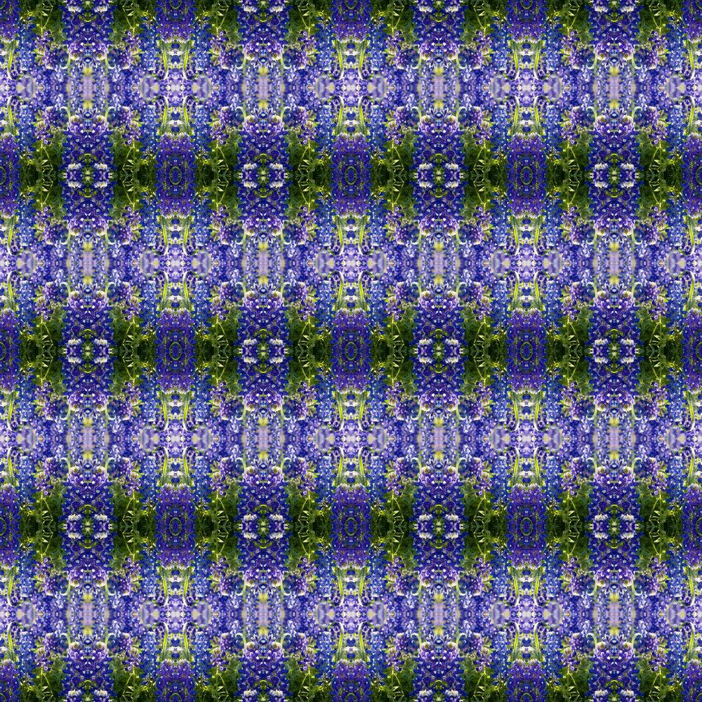 bluebonnets 1.jpg