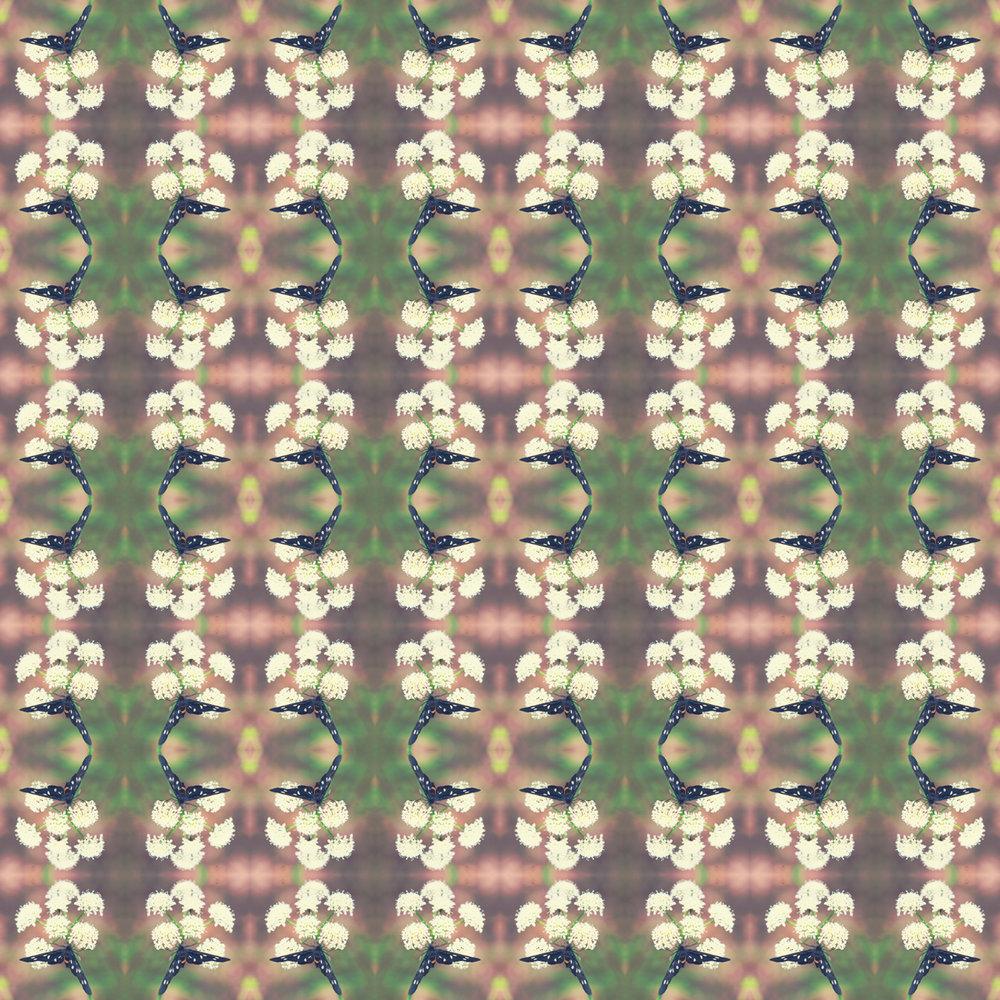 butterfly x8.jpg