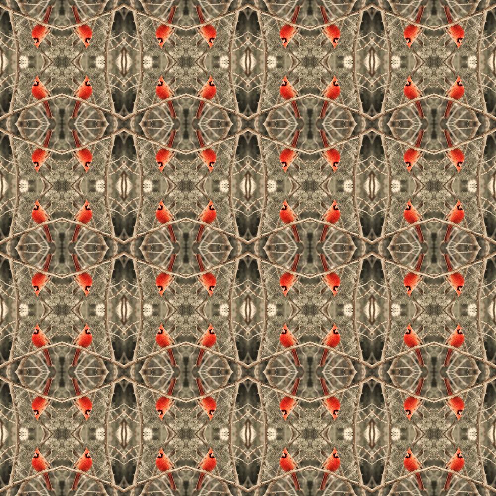 cardinal x8.jpg
