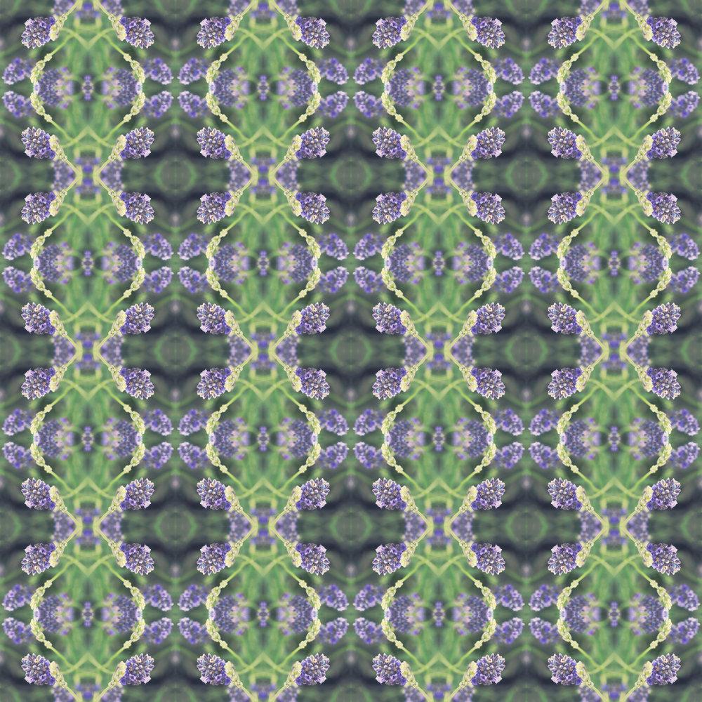 lavender x8.jpg