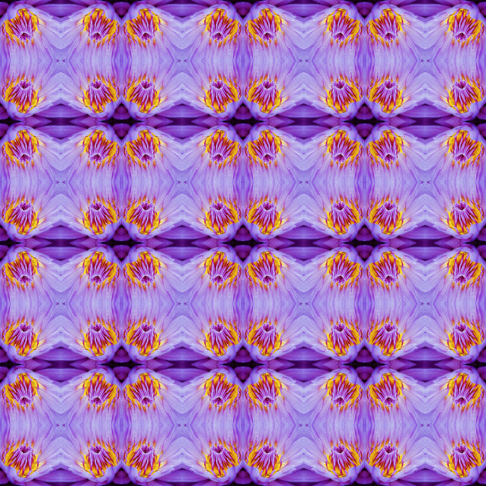 lotus x8.jpg